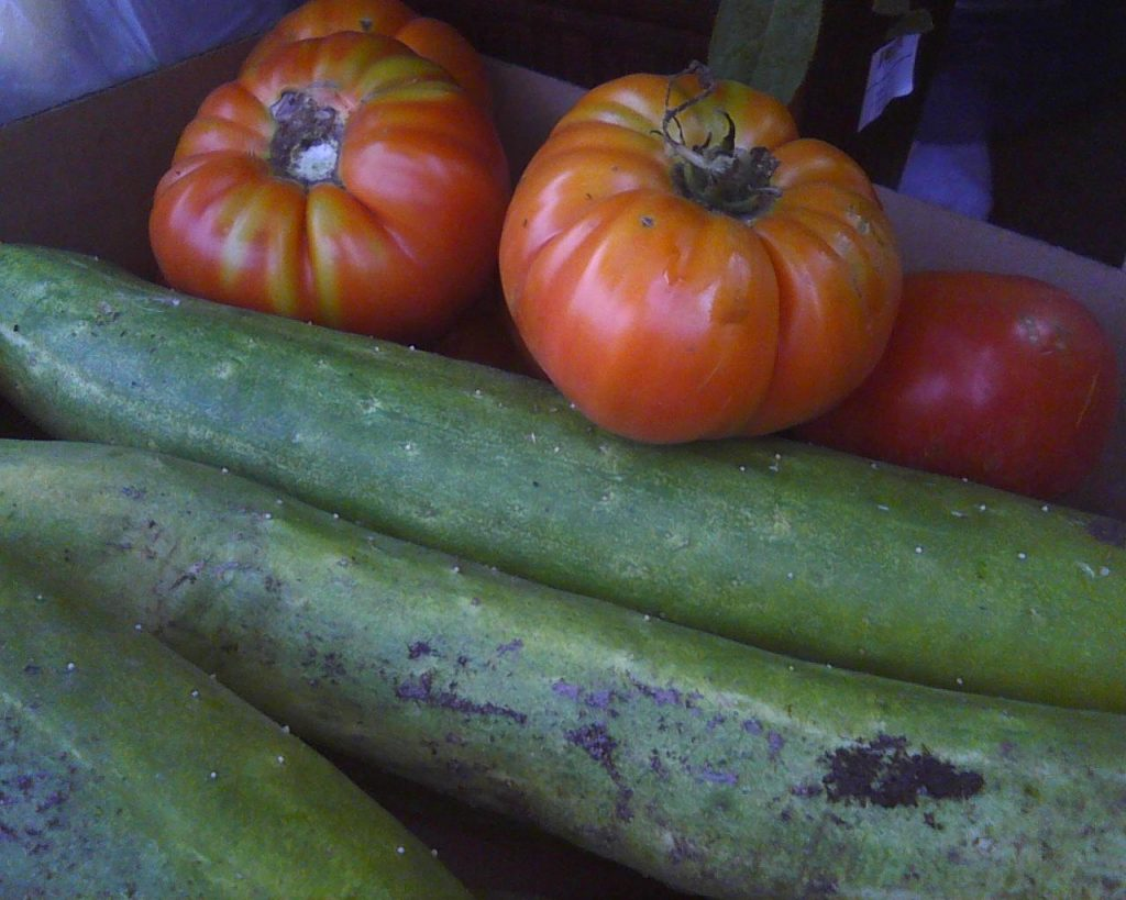 Figure 1. Some of the vegetables grown in the community garden last year.  Used with permission from the author